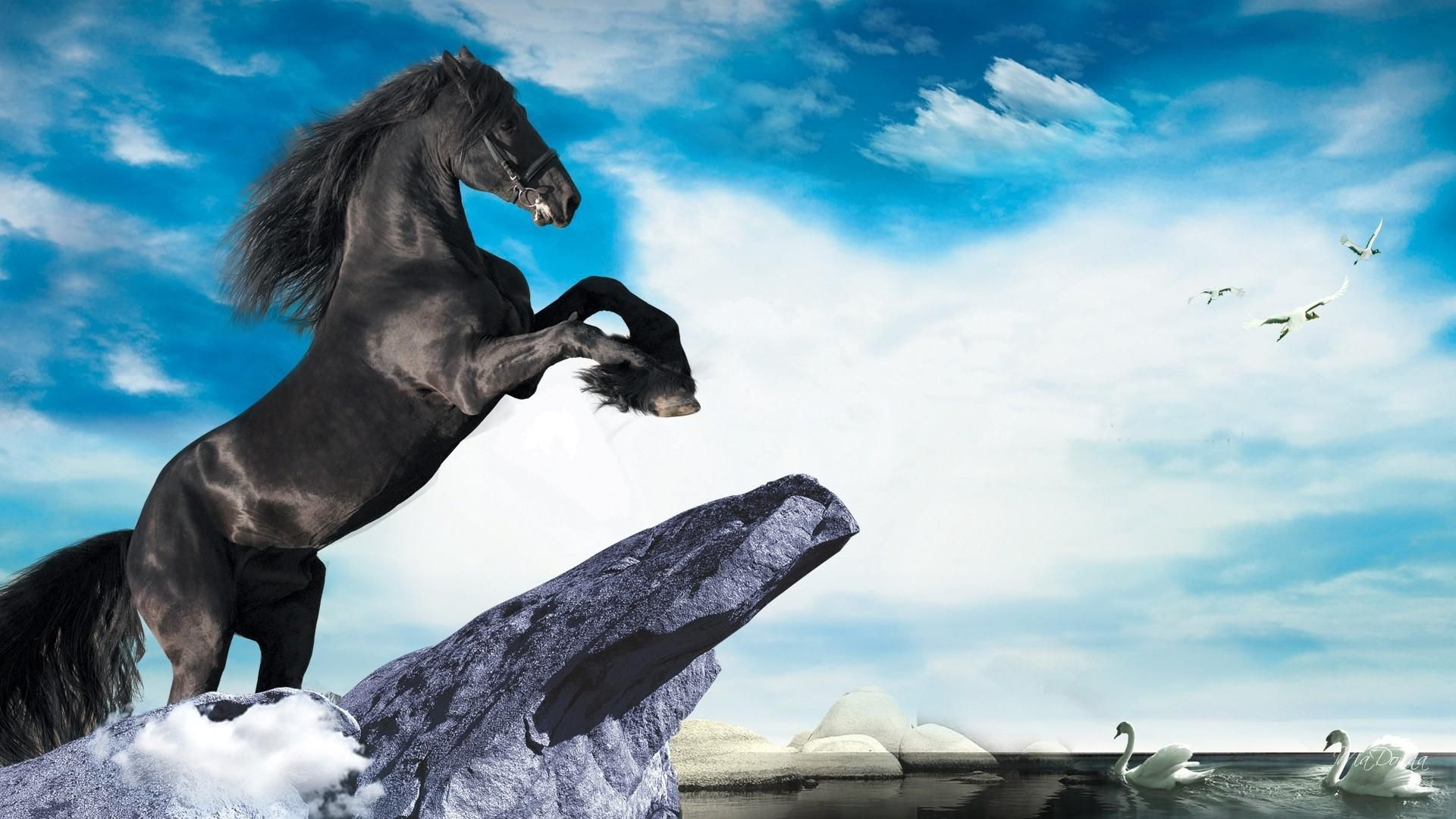 Grossen Schwarzen Hengst Hd Desktop Hintergrund Breitbild High Definition Vollbild Black Stallion Horses Swan Wallpaper