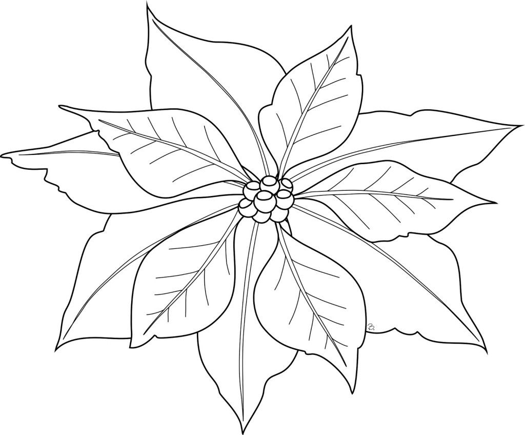 Poinsettia Coloring Page For Kids Craft Ideas