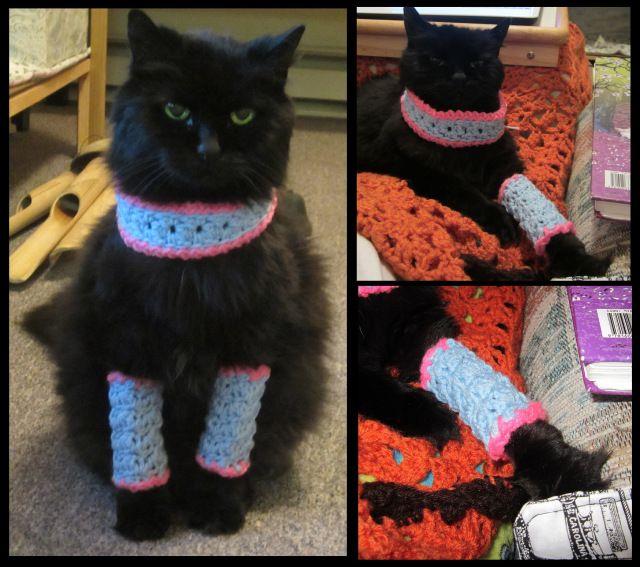 Marie Antoinette Kitty Leggins Free Crochet Pattern Pet Cat Kitty