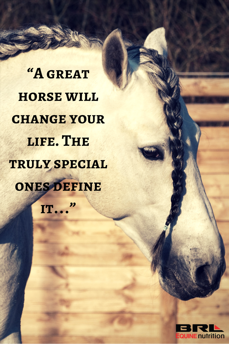 """A great horse will change your life. The truly special ..."