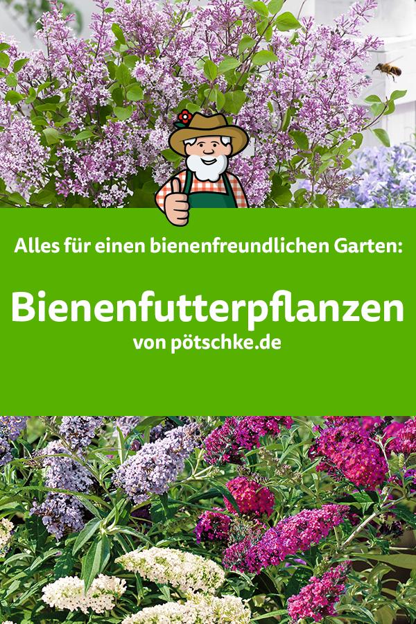 Bienenfutterpflanzen - Alles für einen bienenfreundlichen Garten
