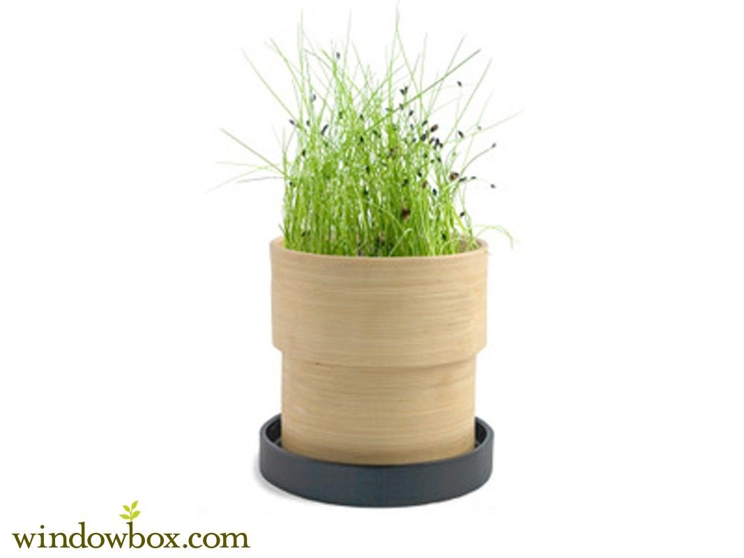 Perfect For Those Looking To Add More Organic Ingredients To Their Recipes Chives Herbs Pots Planting Bulbs Artificial Flowers And Plants Seed Planter