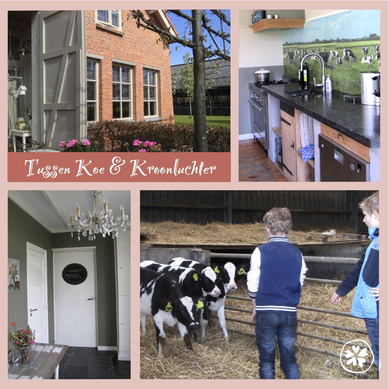Koe en Kroonluchter, vakantiehuisje max 7 pers Diessen (Brabant)