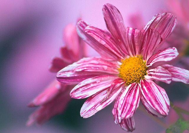 Envoie Fleur A Domicile 72 Fleurs Bouquet Photos Fleurs