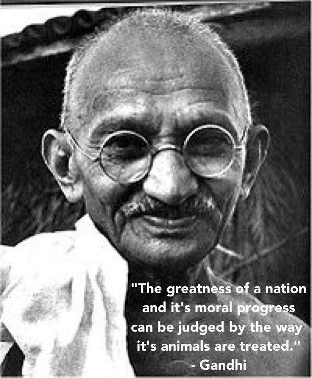 """The greatness of a nation and its moral progress can be judged by the way its animals are treated."" Gandhi"