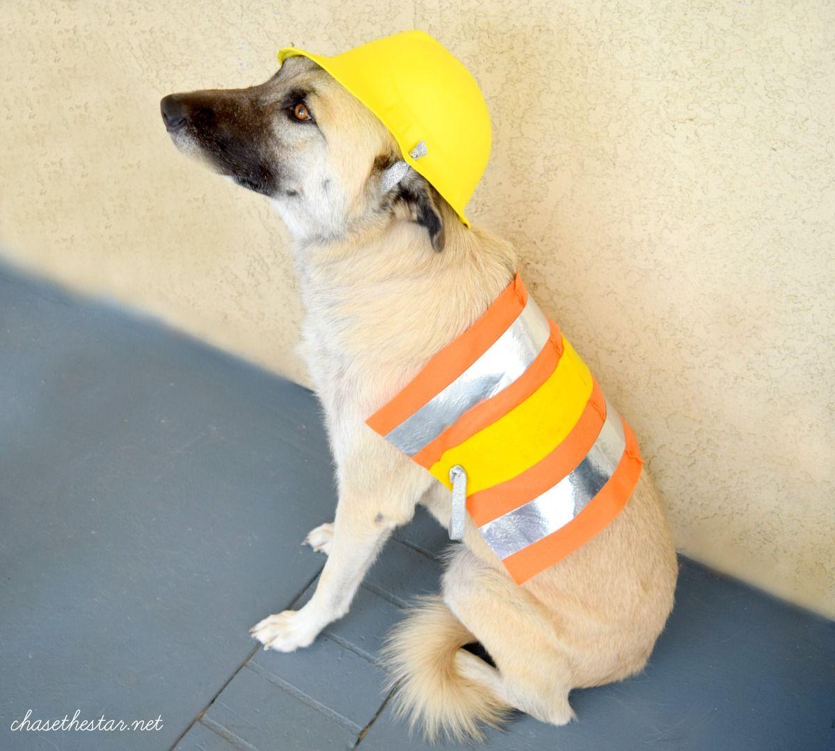 diy dog halloween costumes | www.topsimages