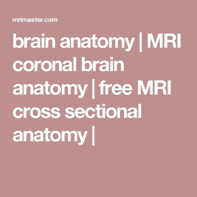 brain anatomy   MRI coronal brain anatomy   free MRI cross