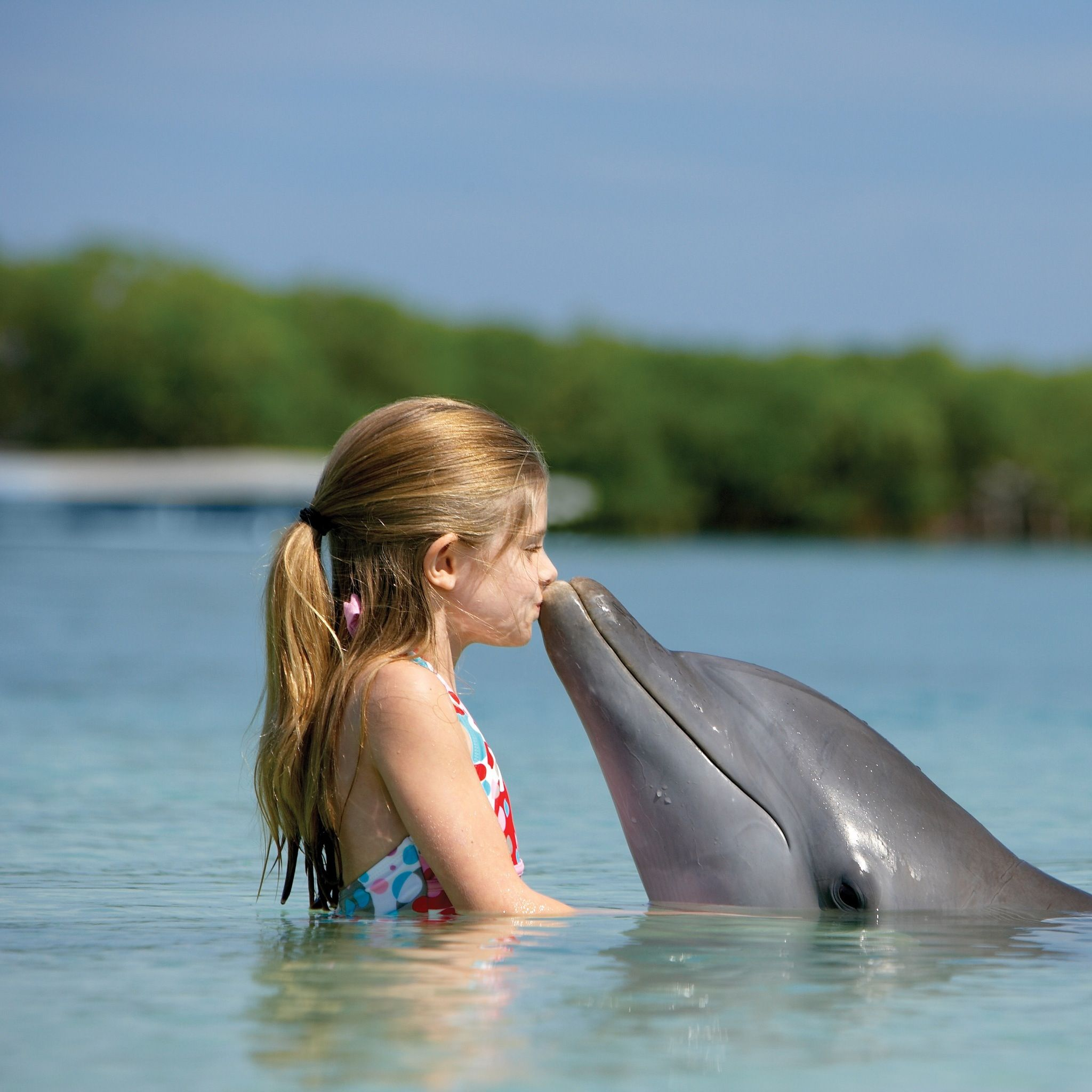 A Kiss To Remember I Think Id Be Scared Great Photo Dolphins