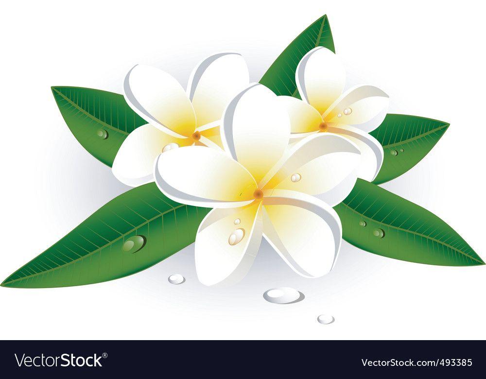 White Flowers Vector Image On Vectorstock Flower Outline Flower Clipart Flower Icons