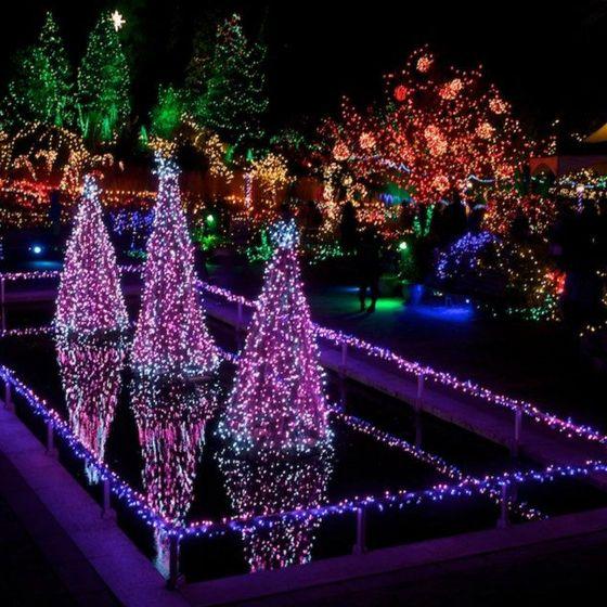 9ba60d8e878ad2f6ea7f8884444891eb - Festival Of Lights Moody Gardens December 11