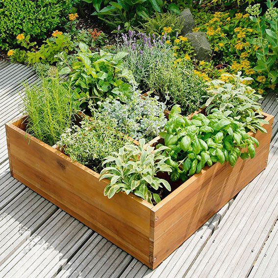 Hochbeet Fur Krauter Mit 9 Pflanzkammern Akazie Von Gartner Potschke Garten Bepflanzen Pflanzen Garten Pflanzen