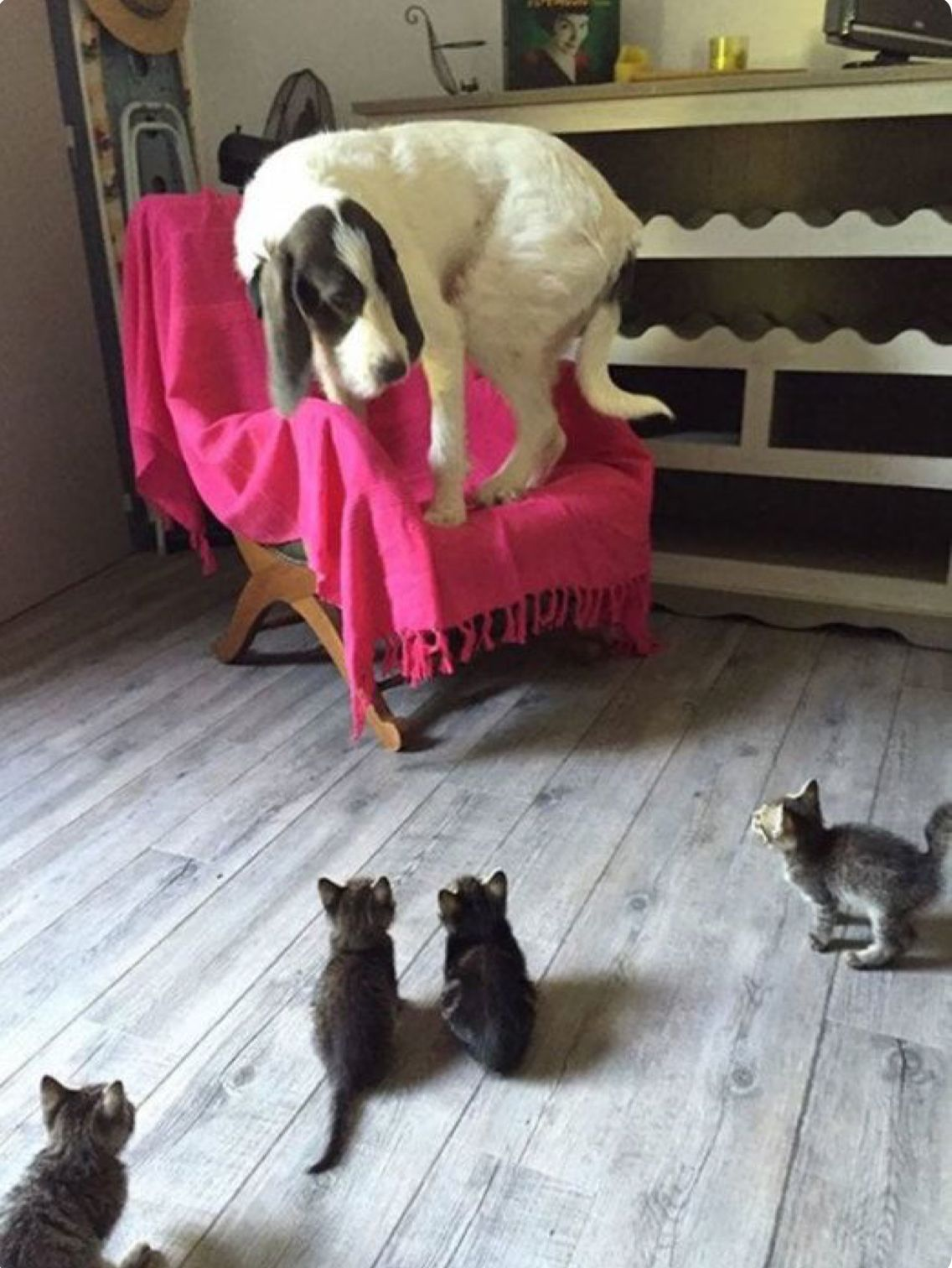 Pin By Brianne Jones On Cats Kittens Funny Cute Animals Funny Animal Pictures