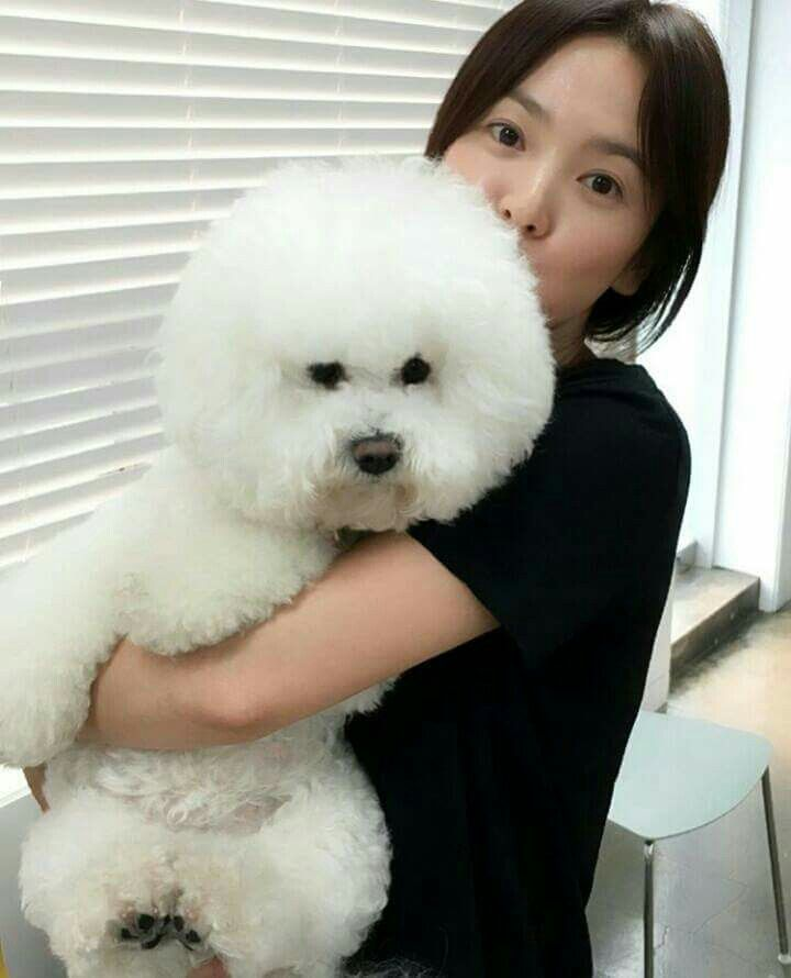 So cute with that dog ^^ Song hye kyo, Gentleman songs