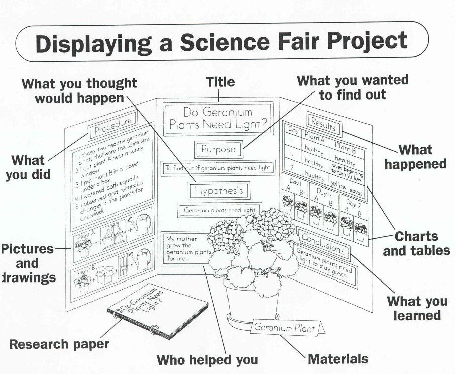 science project format