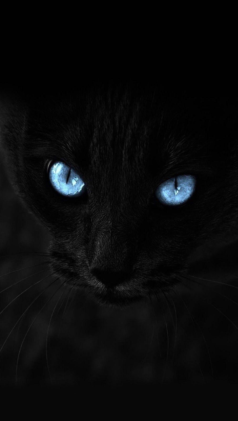 Black Cat Cat Wallpaper Black Wallpaper Blue Cats