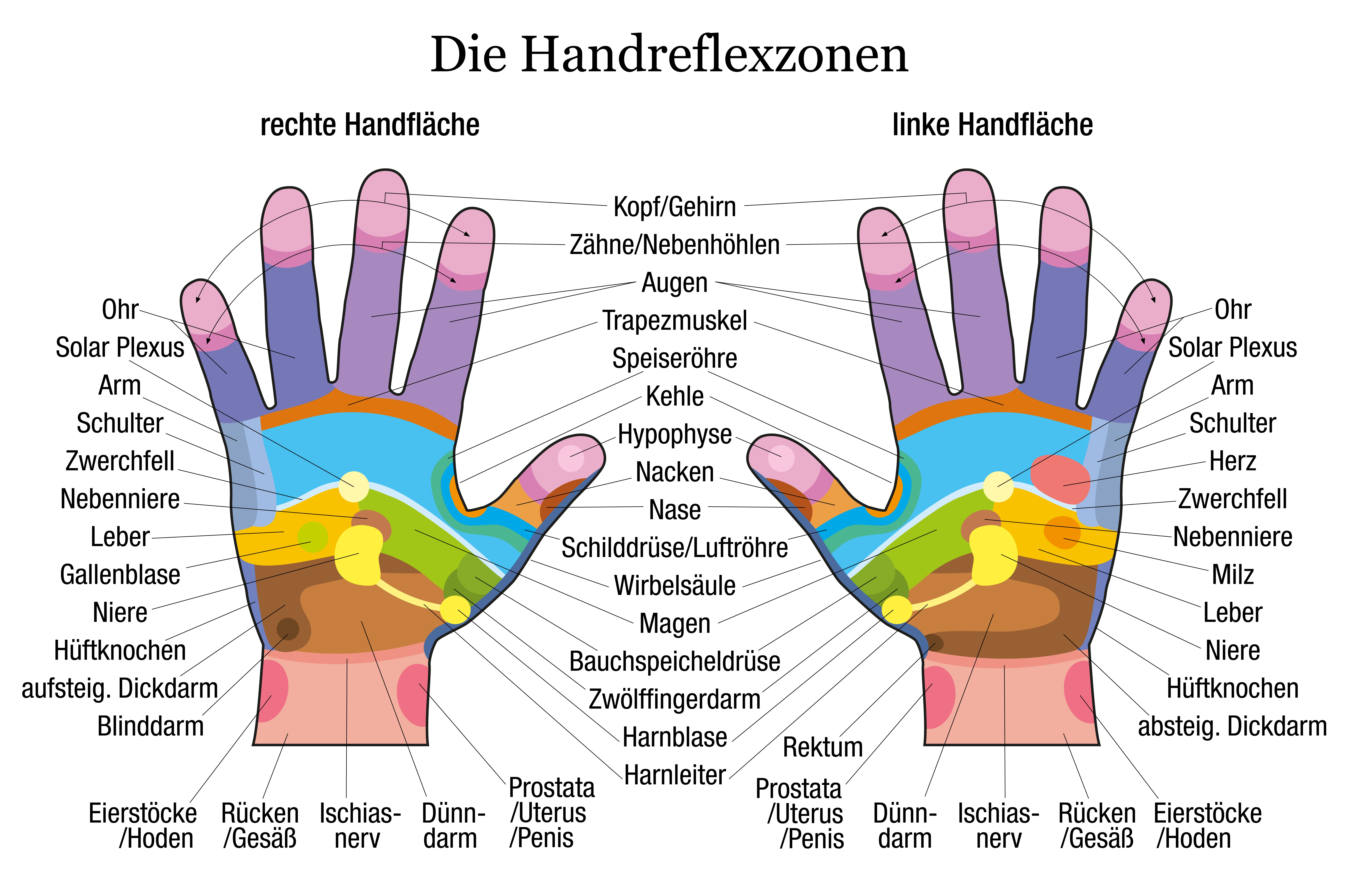 Übersicht über Handreflexzonen detailliert dargestellt. Weiterhin ...
