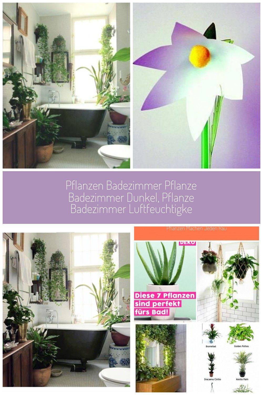 Badezimmer Pflanzen Ohne Fenster Pflanzen Badezimmer Pflanze Badezimmer Dunkel Pflanze Badezimmer Luftfeuchtigke New Ideas In 2020 Plants