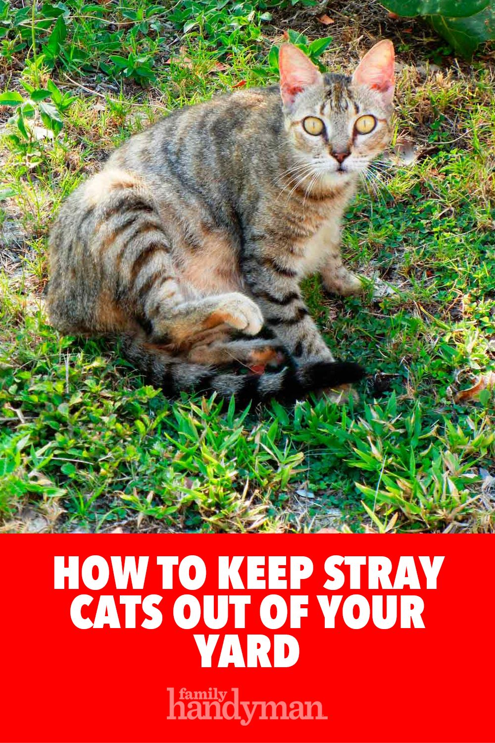 How to Keep Stray Cats Out of Your Yard Cat repellant