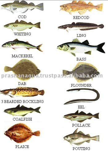 All types of fish sea fish types products india sea fish for All fish names