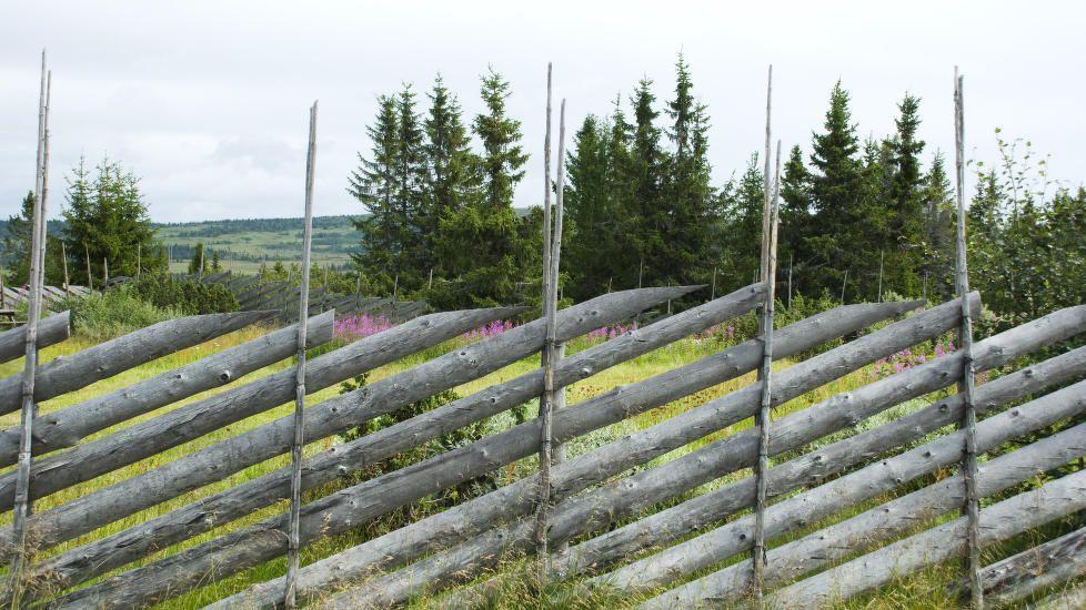 EKSEMPEL PÅ SKIGARD:  Her fra Sjusjøen. Illustrasjonsfoto: Berit Roald, NTB…