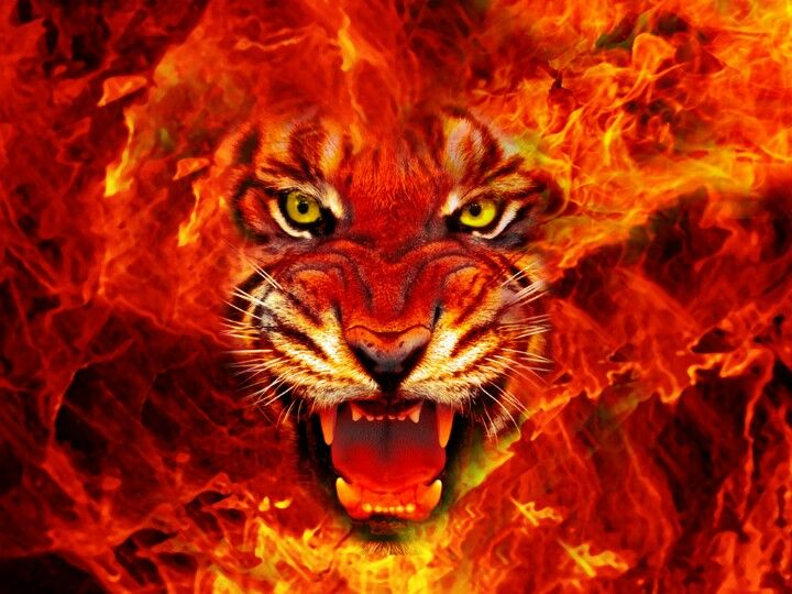 Tiger On Fire Tiger Pictures Tiger Face Fire Art