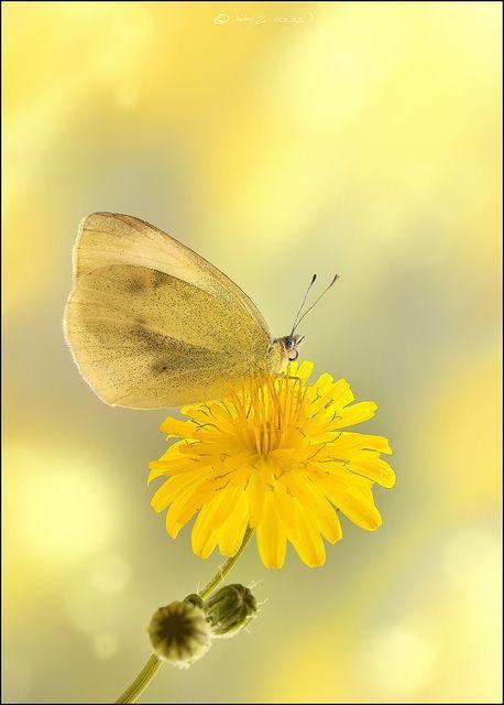 Pin Von Gundula Orban Auf Regen Blumen Zitronengelb Und Gelb