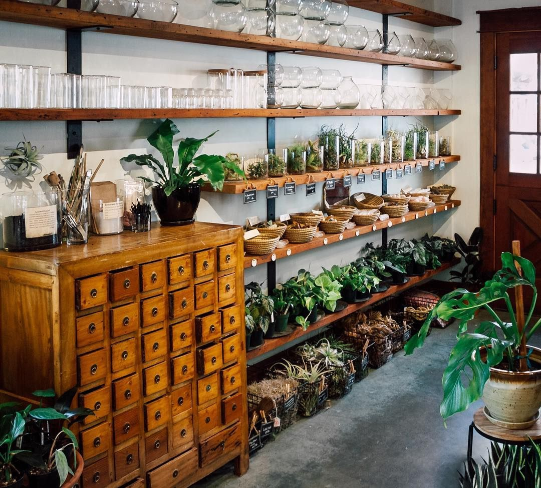 Terrarium bar, airplants, philodendron and lots of shiny