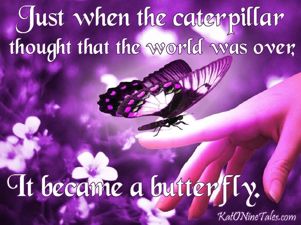 Kat o nine tales the butterfly a short story about my experience kat o nine tales the butterfly a short story about my experience with domestic buycottarizona