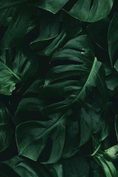Leaf Green II Art Print by Danilo de Alexandria | iCanvas
