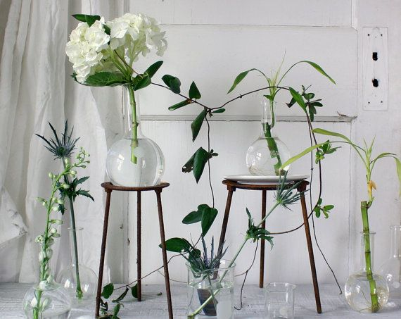 Vintage Lab Beaker Vase Dwell Pinterest Labs Vintage And Plants