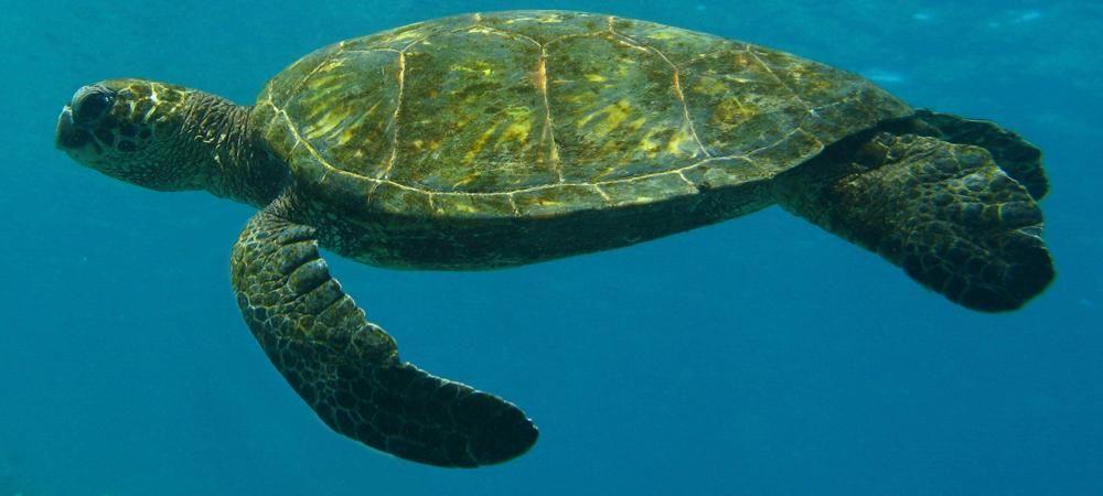 Kona Diving Company >> Kona Diving Company Big Island Scuba Diving At Its Best