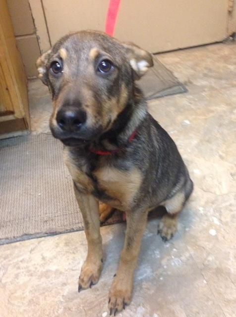 Adopt Harris Pictured And Wittels 1 Of 2 Pups On Animals