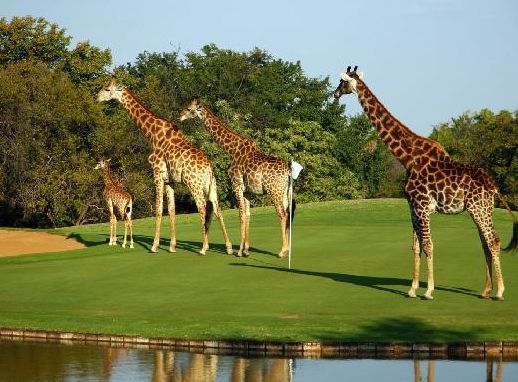 Only in South Africa!  Contact African Ace Golf Tours for more information on our packages.