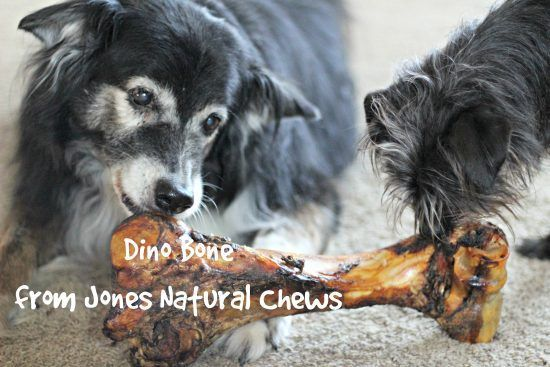 Pin By Homesteadingedu On Dogs Dog Bones Cute Dog Photos Dogs