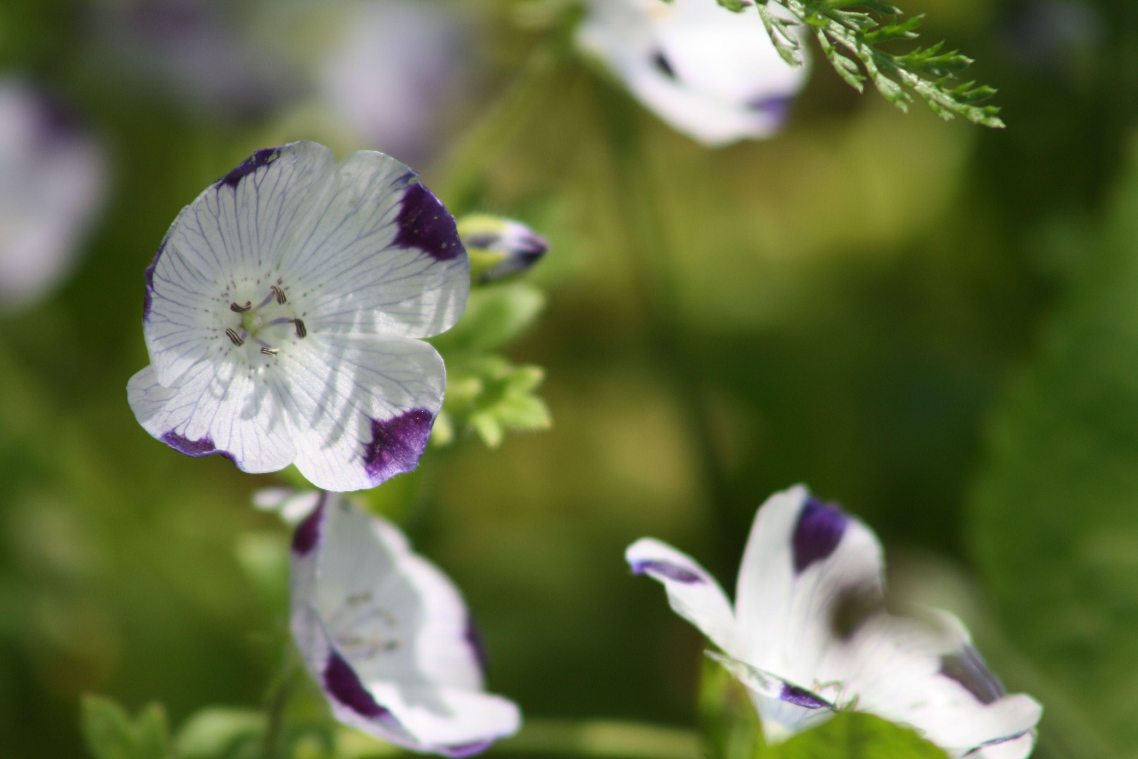 Social Media Website Webshop Fur Handel Florist Gartnerei Gartnerei Offene Garten Gartencenter