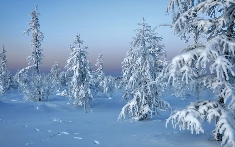 Frozen Trees Winter Snow Nature Hd Wallpapers Winter Backgrounds