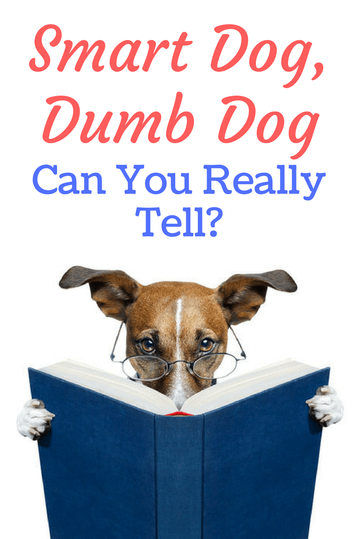 Smart dog dumb dog can you really tell dog supplies