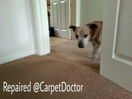 Pet Damaged Carpets Repaired Carpetdoctor Carpet Repair Repair Pets