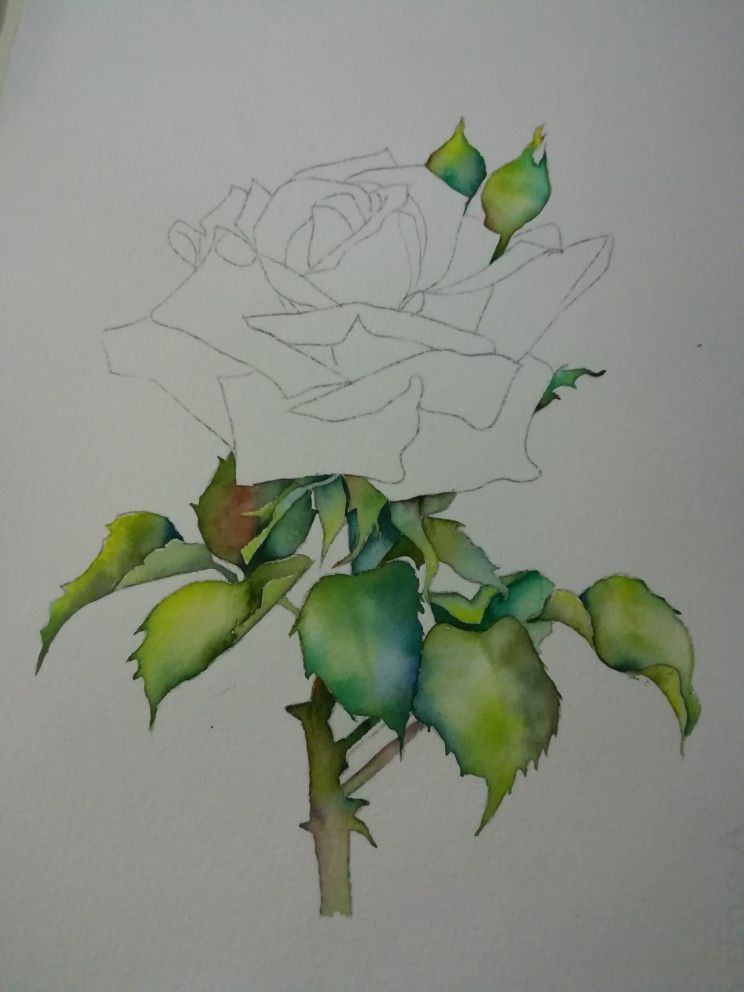 Pin By Jane Obersat On Artists Flower Illustration Rose Art Floral Art