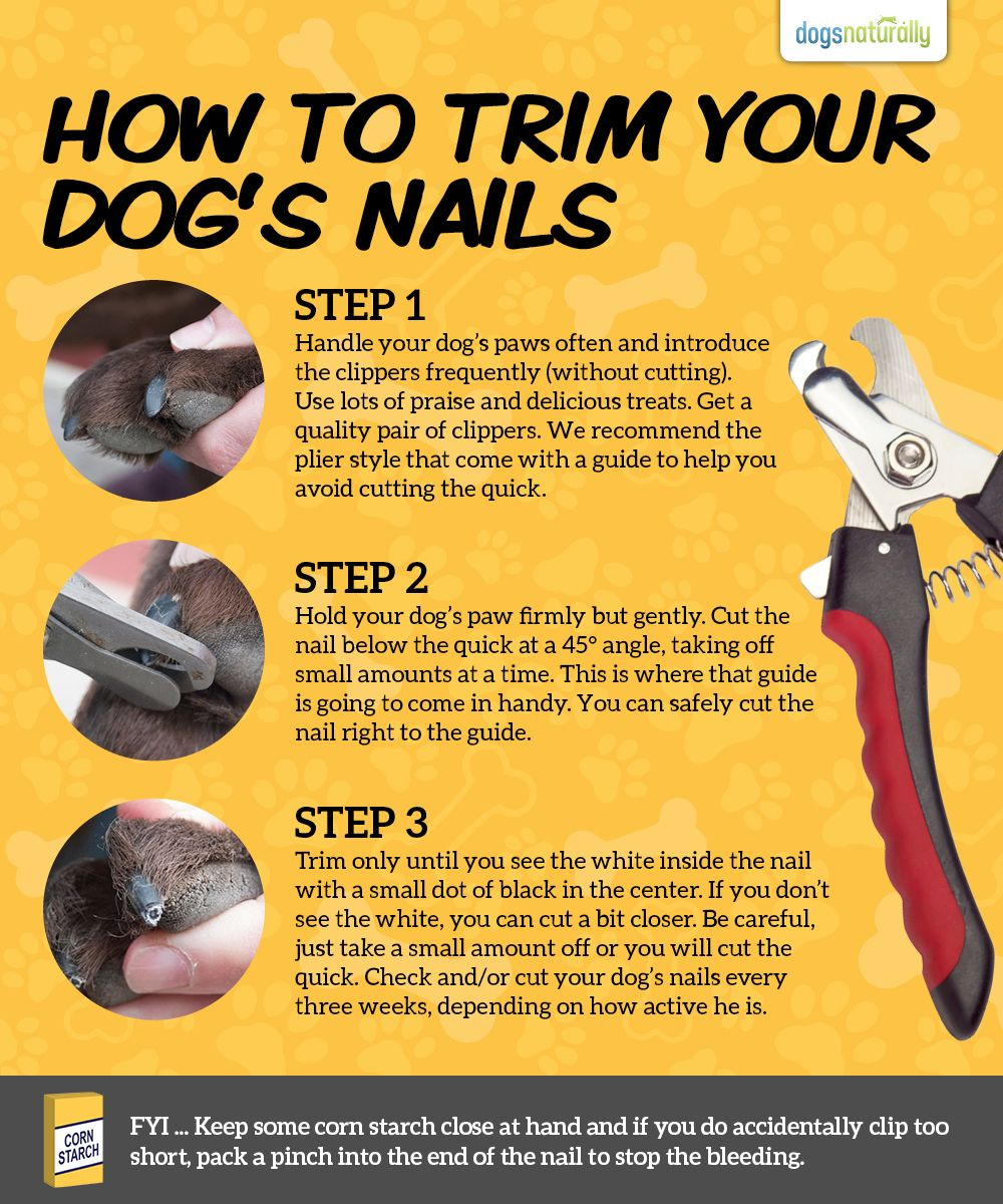 A stressfree way for trimming your dogs toenails dog