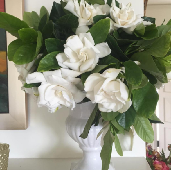 Beautiful Gardenias In A Vase Gardenia Flower Arrangement High Camp Gardenias In A Vase Gardenia Collection Bunch O Flower Boxes White Flowers Gardenia
