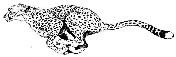 Animal Coloring Pages Cheetah Animal Tattoos Cheetah Drawing Cheetah Tattoo