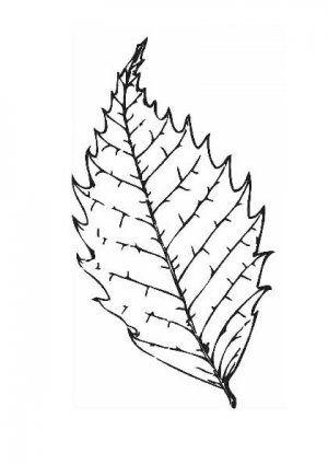 Раскраски осенних листьев | Раскраски, Осенние листья, Листья