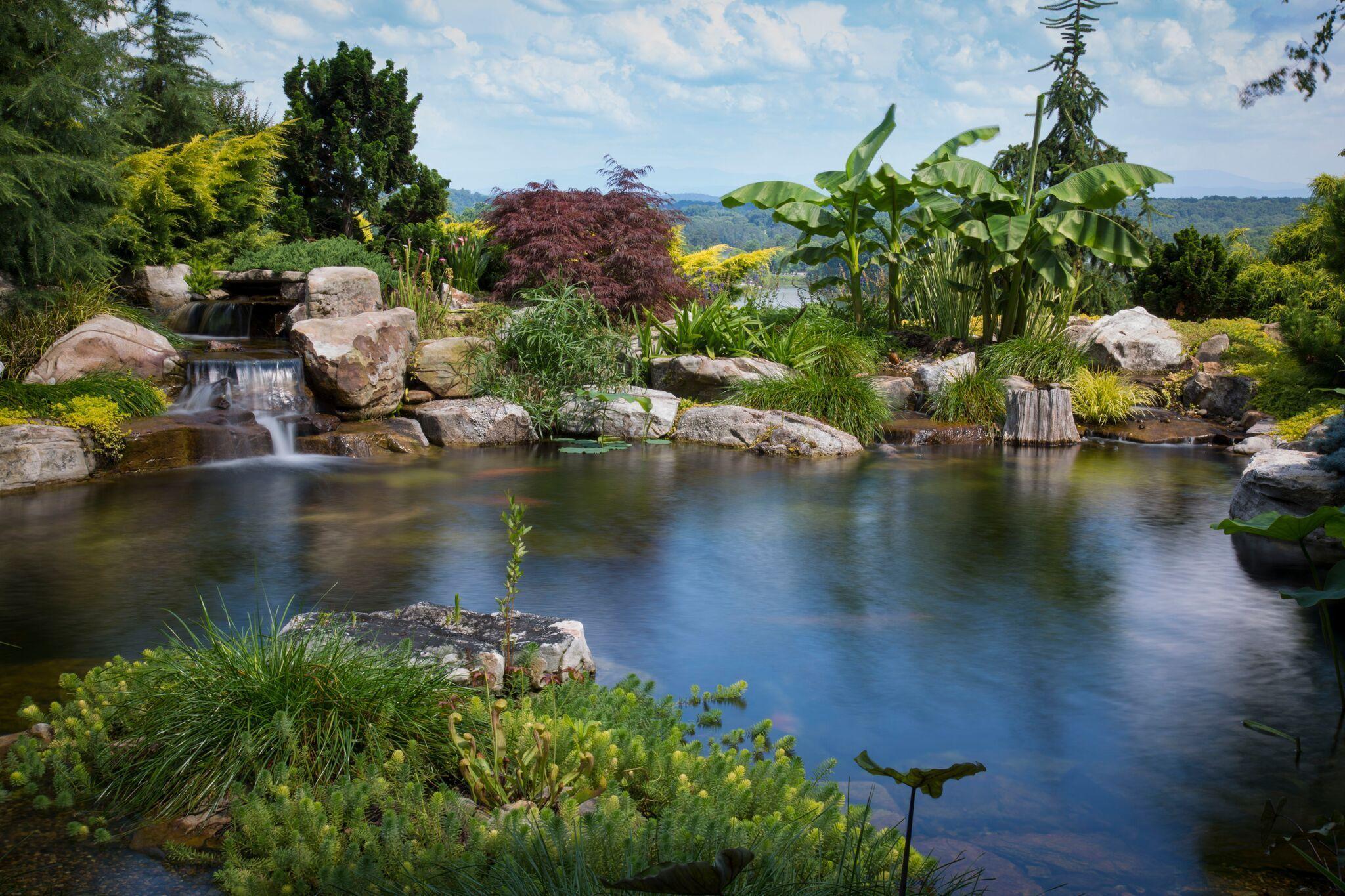 ponds by Joe Matteo | Backyard water feature, Pond water ...