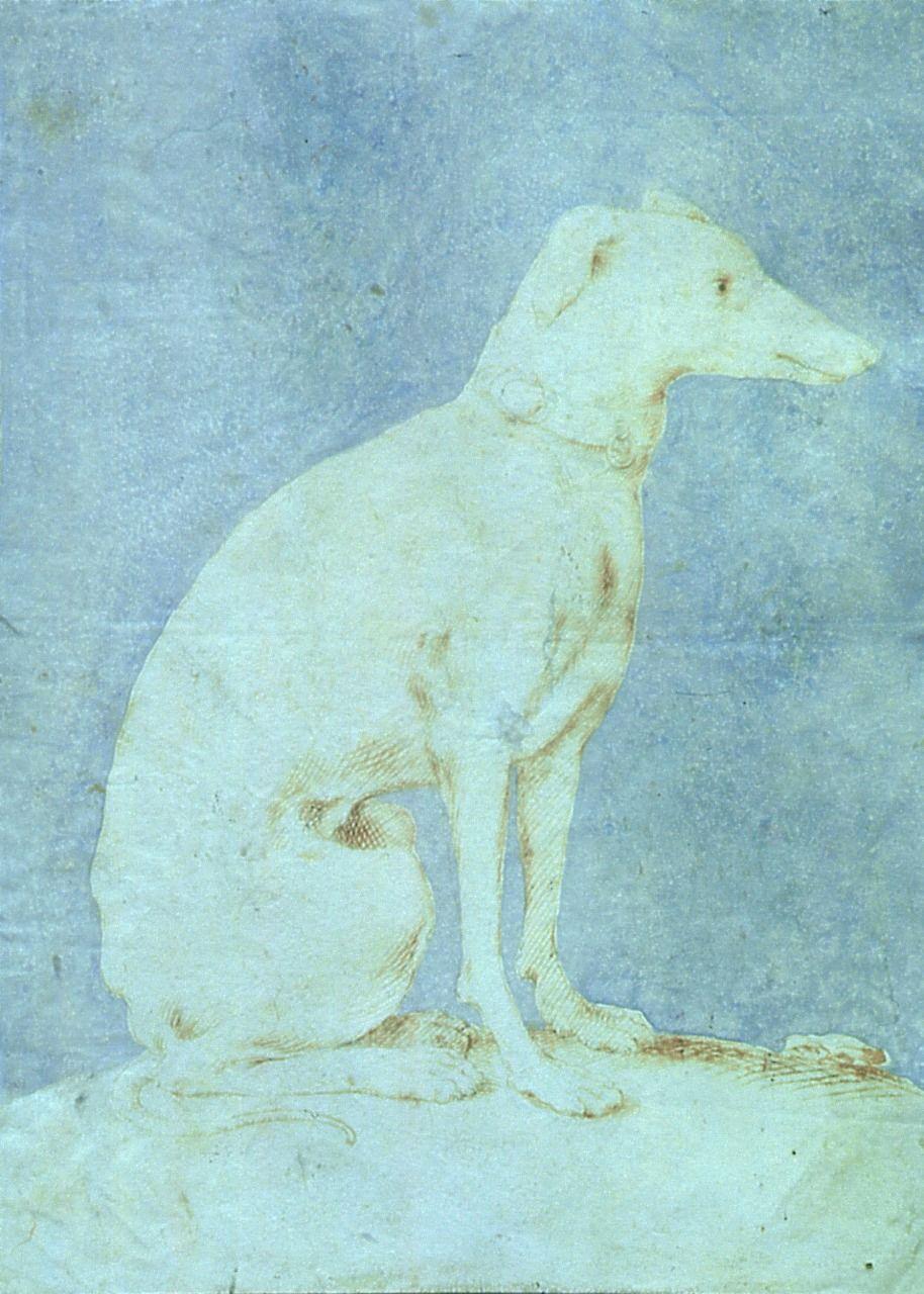 Francesco Mazzola, Il Parmigianino( 1503-1540). Levriero (Whippet). Brown ink on paper. Pinacoteca Stuard, Parma, Italy