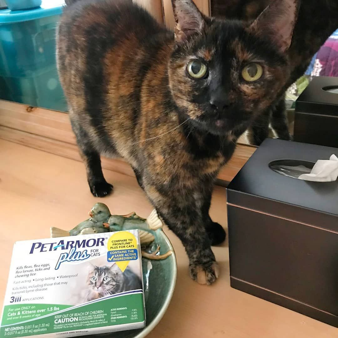 Believe It Or Not Indoor Cats Can Get Fleas And Ticks Too I Combat These Pesky Pests With Vet Quality Petarmor Plus For C Indoor Cat Cats Cat Health Care