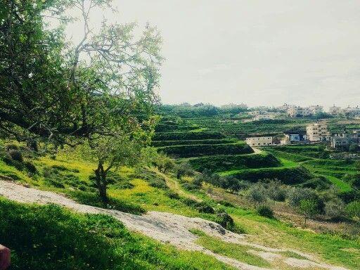 صور فصل الربيع في عصيرة القبلية نابلس فلسطين Country Roads Golf Courses Field