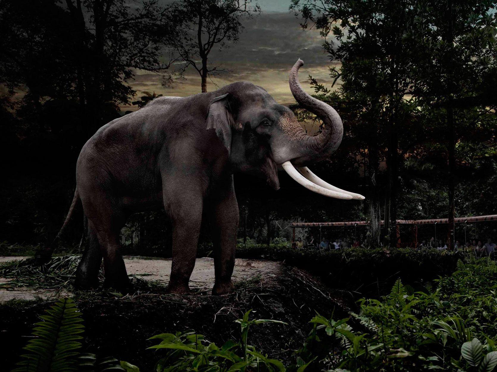 About Night Safari In 2020 Travel Tour Companies Singapore Tour