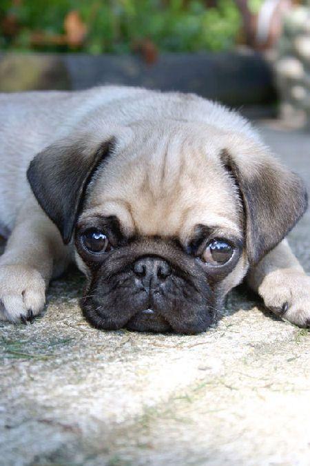 Puppyy<3
