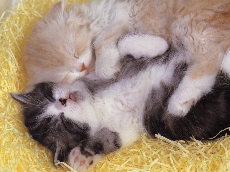 Deux Chats Trop Mignon Et Jolie Qui Dorment Cute Baby Animals Cute Baby Cats Kittens Cutest Baby